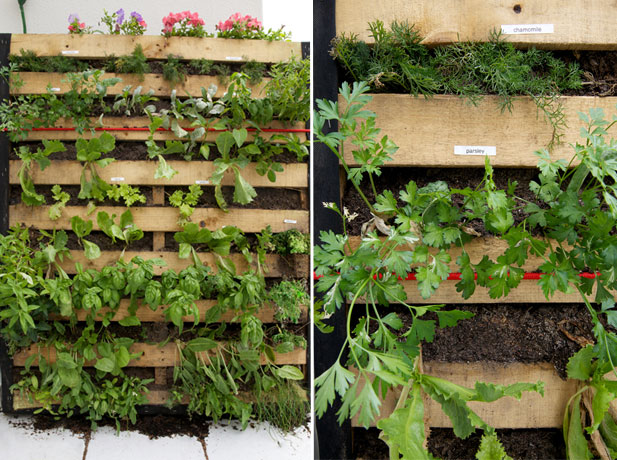 How to make a pallet garden for Vertical pallet garden